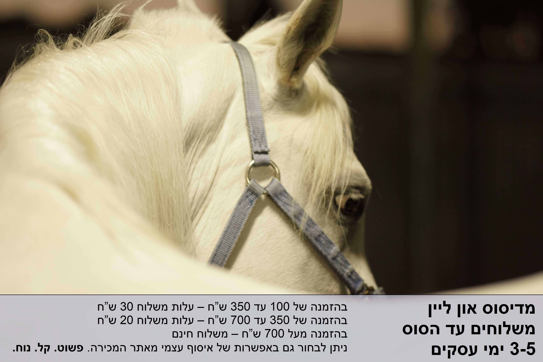 משלוחים ציוד סוסים
